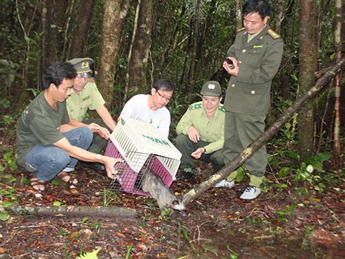Lực lượng kiểm lâm TP HCM thả động vật hoang dã về tự nhiên