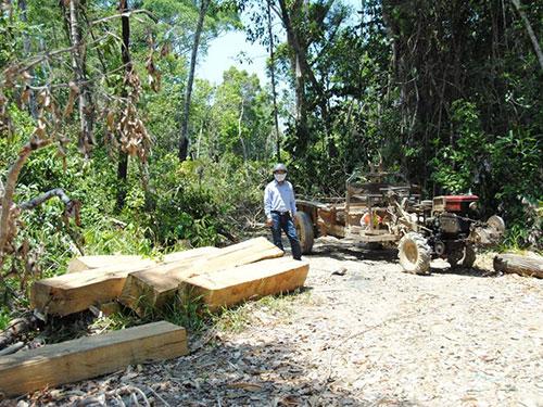 Một bãi tập kết gỗ lậu bên đường, cách trạm quản lý bảo vệ rừng của Công ty Lâm nghiệp Quảng Đức khoảng 1 km Ảnh: BÌNH NGUYÊN