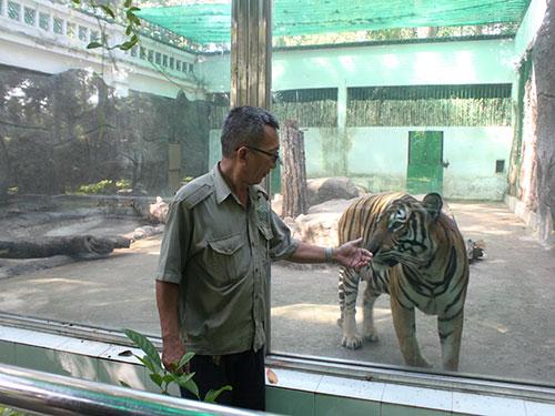 Ông Trần Minh Tâm cùng với một con hổ Đông Dương