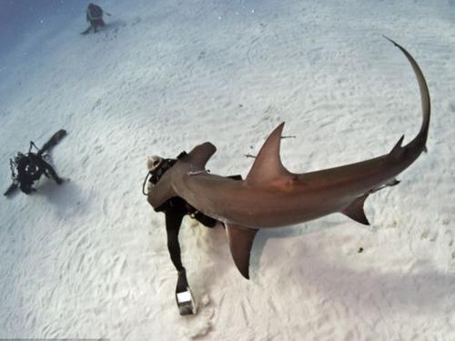 Thợ lặn một mình đối diện với hàm cá mập