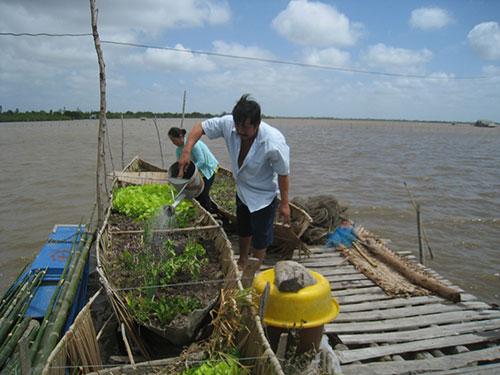 Ngư dân trồng rau ngay trên đầm để cải thiện bữa ăn
