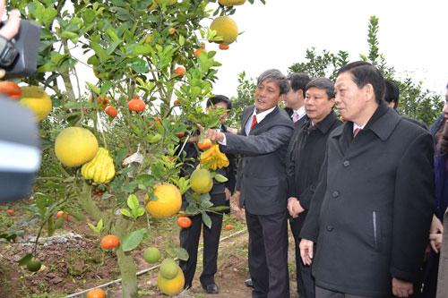 Ông Lê Đức Giáp (thứ hai từ trái qua) đang giới thiệu về cây ngũ quả cho lãnh đạo TP Hà Nội