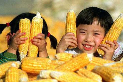 Bắp Mỹ sản xuất tại Trung Quốc Ảnh: REUTERS