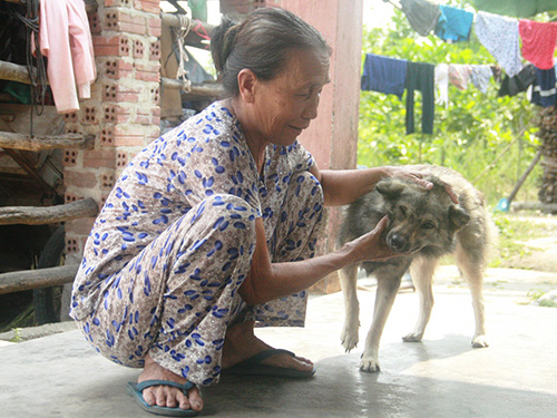 Người dân Phú Dương nuôi chó nhưng chẳng bao giờ giết thịt ăn Ảnh: TRẦN THƯỜNG