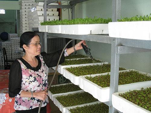 Bà Duyên chăm sóc vườn rau trong căn phòng 16 m2