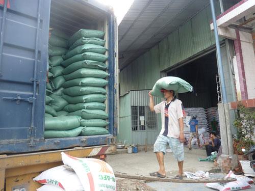 Giá gạo tăng cao nhưng doanh nghiệp xuất khẩu kêu bị lỗ