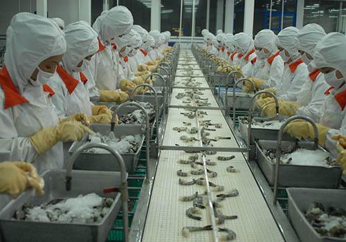 Hàng Việt xuất vào EU tiếp tục khả quan. Trong ảnh: Chế biến tôm đông lạnh tại một nhà máy ở TP HCM  Ảnh: Nguyễn Hải