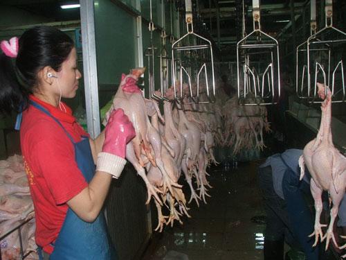 Giá thịt gà bán trên thị trường không hề giảm
