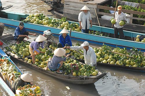 Nhiều loại trái cây ở đồng bằng sông Cửu Long đang giảm giá mạnh