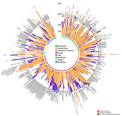 Bản đồ tổng thể về quá trình chuyển hóa trong cơ thể người Ảnh: Medical Xpress