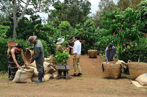 Hàng nông sản chủ yếu vẫn còn xuất khẩu dạng thô