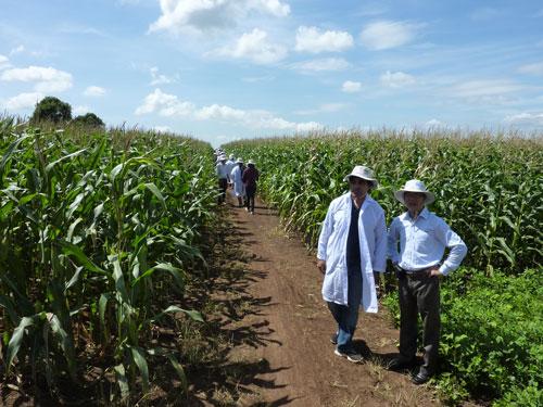 Cần có chính sách ưu đãi hấp dẫn mới có thể thu hút vốn FDI vào nông nghiệp nông thôn. (Ảnh chỉ có tính minh họa) Ảnh: NGUYỄN HẢI