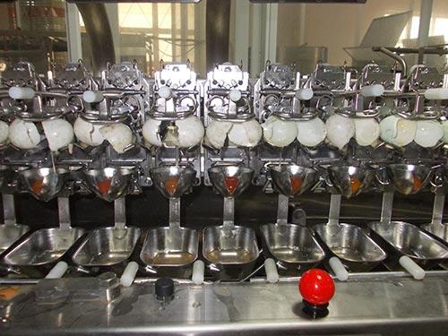 Một trong những công đoạn sản xuất trứng muối nguyên liệu
