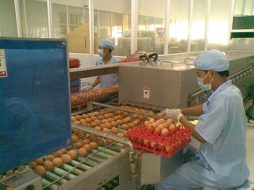 Sản phẩm trứng của Vietfarm được kiểm tra nghiêm ngặt