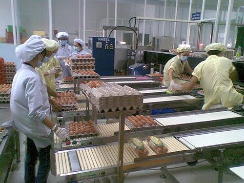 Sản phẩm trứng gia cầm có nguồn gốc, được kiểm dịch và xử lý tại các nhà máy được người tiêu dùng chọn mua