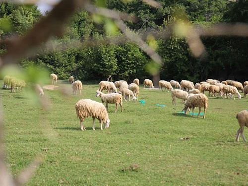 Vùng đất Ninh Thuận được giới thiệu trong phim Dấu chân du mục. (Ảnh do đoàn làm phim cung cấp)