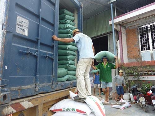 Giá lúa gạo tại đồng bằng sông Cửu long đang giảm nhẹ