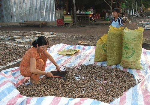 Xuất khẩu nông sản chủ yếu là hàng thô