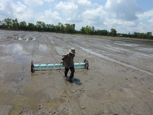 Nông dân sáng kiến sạ lúa bằng ống trục