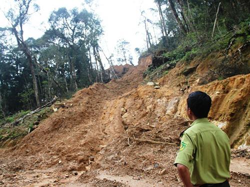 Tuyến đường do lâm tặc san ủi để vào khai thác rừng trái phép tại Tiểu khu 95 KBTTN Ngọc Linh