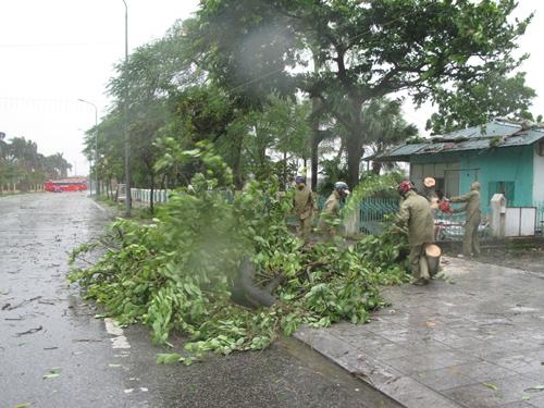 Những chiếc cây đầu tiên ở Móng Cái gãy đổ sáng 19-7