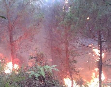 Trong những ngày cuối tháng 5-2014 liên tiếp xảy ra các vụ cháy rừng ở Nghệ An (ảnh P.Hòa)