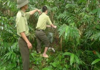 Cán bộ Vườn QG Pù Mát thả các cả thể khi về môi trường tự nhiên. (Ảnh Vườn QG Pù Mát cung cấp).