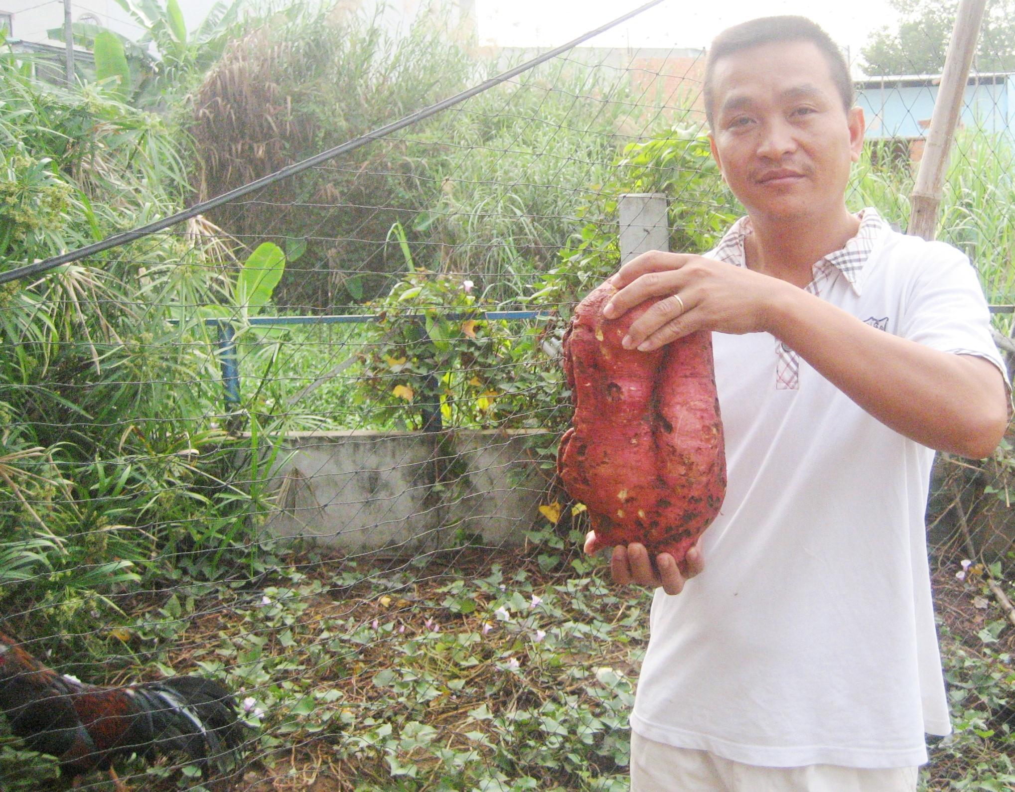 Anh Trần Công Tuấn bên củ khoai lang đào được, nặng hơn 4,3 kg