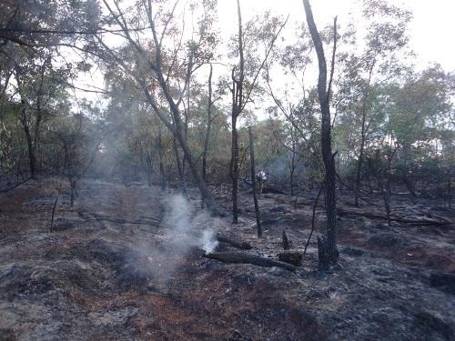 Hơn 5 ha rừng phòng hộ bị lữa thiêu
