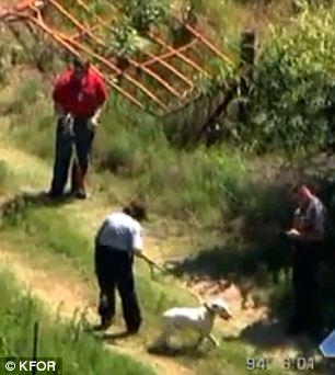 Các nhân viên bảo vệ động vật đến đưa chú chó về trung tâm. Ảnh: KFOR