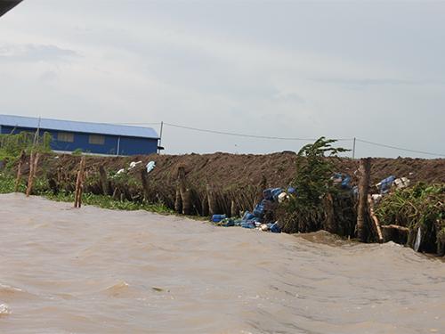 Bờ đê trên sông Cổ Chiên bị sạt lở nghiêm trọng vì khai thác cát
