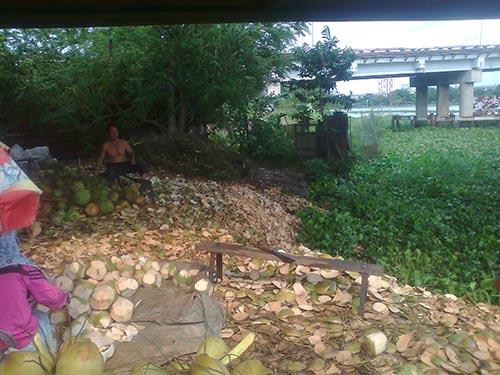 Một vựa kinh doanh dừa trái thoải mái vứt vỏ dừa xuống sông Sài Gòn, đoạn dưới chân cầu Bình Triệu