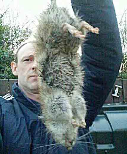Con chuột khổng lồ người đàn ông người Anh bắt trước đó