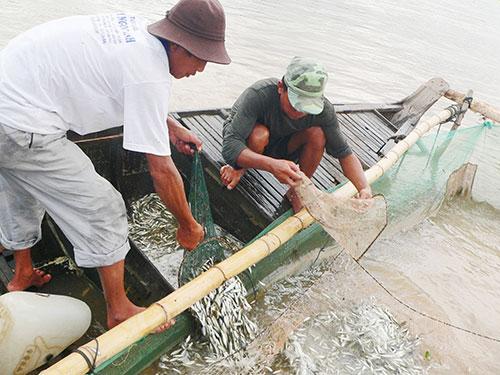 Người dân ĐBSCL chịu ảnh hưởng nặng nề của việc xây hàng loạt thủy điện trên sông Mê Kông Ảnh: THANH VÂN