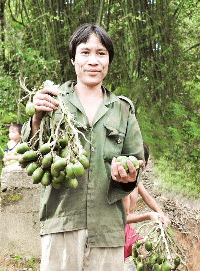 Anh Hồ Văn Lang hái cau giúp bà con chòm xóm. Ảnh: T.T