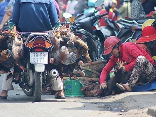 Buôn bán gia cầm ở một chợ tự phát tại TP Nha Trang, tỉnh Khánh Hòa.Ảnh: KỲ NAM
