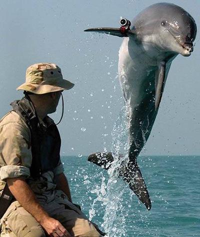 Cá heo đeo loại máy ảnh chuyên dụng có thể chịu được độ sâu trên 100 m. Ảnh: TOP WAR