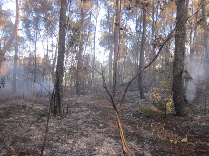 Ngọn lửa lan nhanh uy hiếp khu di tích Ngã Ba Đồng Lộc
