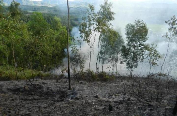 Nhiều héc ta rừng bị thiêu rụi
