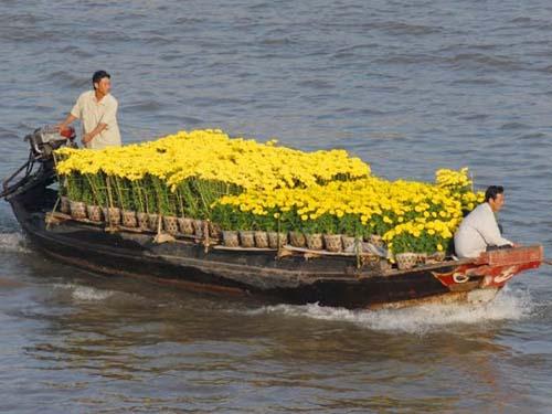 Ghe, thuyền chở hoa hối hả tiến về chợ nổi