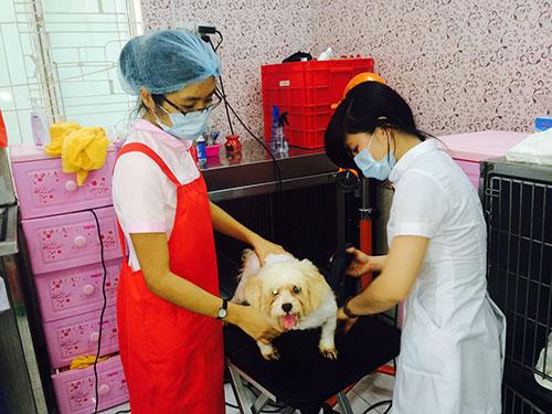 Tắm, sấy lông, làm đẹp cho thú cưng tại New Pet Hospital (quận 1, TP HCM)