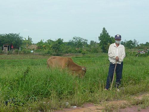 Khu đất trống trong KCN Sông Hậu (xã Đông Thành, huyện Châu Thành, Hậu Giang) bỏ hoang, cỏ mọc um tùm được người dân tận dụng chăn bò