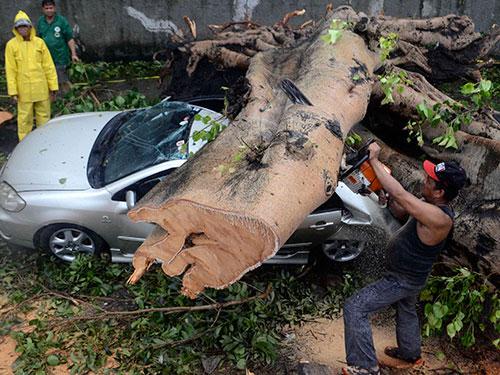 Bão Rammasun giật đổ cây, đè nát ô tô tại TP Makati - Philippines hôm 16-7 Ảnh: REUTERS