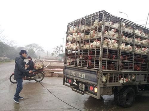 Nhân viên thú y phun thuốc khử trùng cho gia cầm trước khi vào chợ Hà Vỹ (Hà Nội)