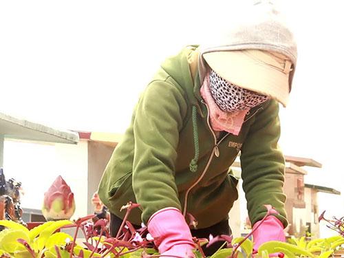 """Các """"ôsin"""" ở nghĩa trang TP Buôn Ma Thuột, tỉnh Đắk Lắk luôn tận tình chăm sóc các mộ phần"""