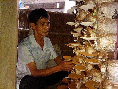 Thu nhập từ trồng nấm giúp ông Lê Văn Út khấm khá