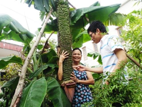 Bà Nguyễn Thị Minh bên cây chuối lạ lung.