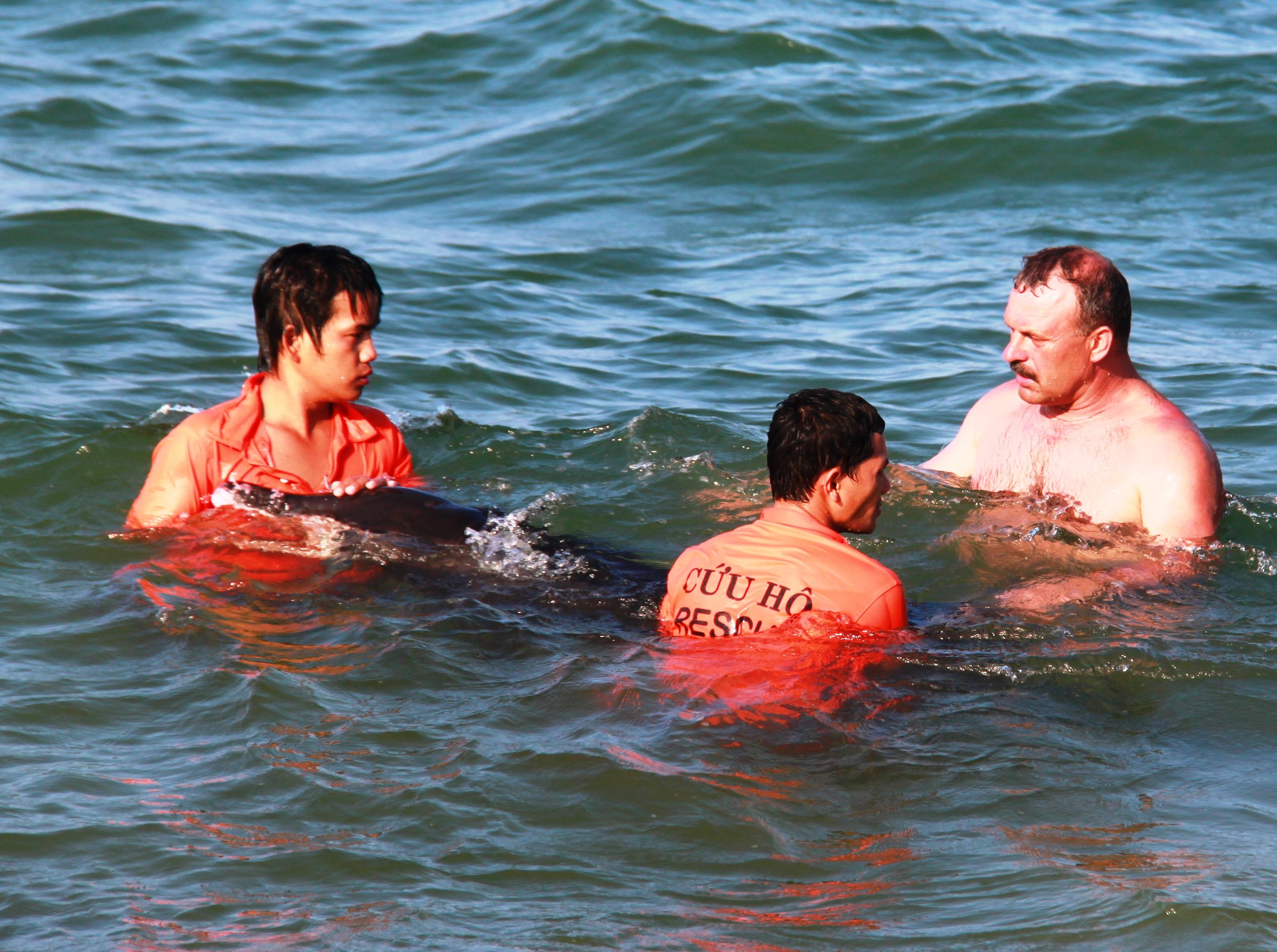 Hai nhân viên cứu hộ tận tình cứu chú cá heo