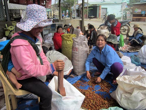 Một cơ sở thu mua hạt mây ở thị trấn Khâm Đức, huyện Phước Sơn, tỉnh Quảng Nam. Ảnh: PHẠM TRỌNG