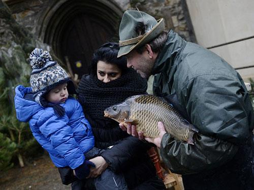 Cá chép được tin là sẽ mang lại may mắn trong năm mới ở Trung Âu Ảnh: EPA